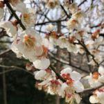 2019年3月の雑感 – 平成最後の3月は「疲れた」の一言